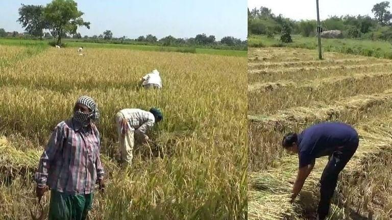 महाराष्ट्र बंद: 'तो' आजही शेतात राबतोय, शेतकऱ्याला सुट्टी नाहीच…